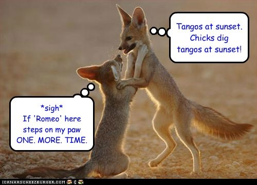 couple,dancing,desert,fighting,foxes,Ladies Love,playing,romantic,stepping on things,sunset,tango,trying too hard