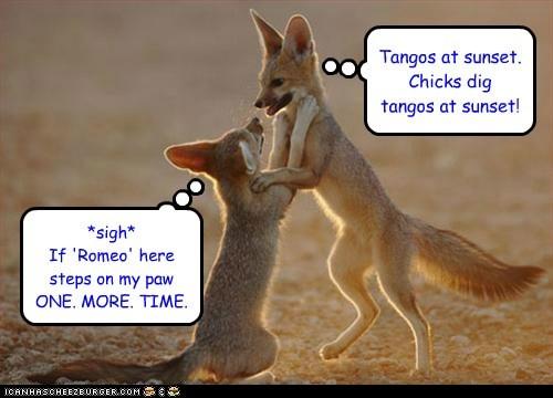couple dancing desert fighting foxes playing romantic tango - 6405726720