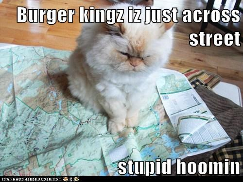 Cheezburger Image 6405869056