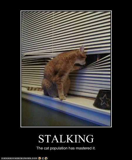 STALKING The cat population has mastered it.