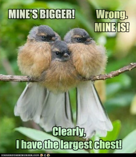 argument bigger birds chest inuendo puffed up - 6406220032