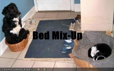 bed cat dogs mix up not fair what breed