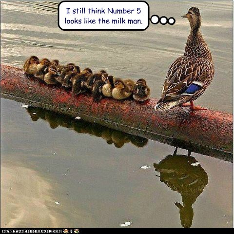 ducklings,ducks,kids,milk man,numbers,parenting,suspicious