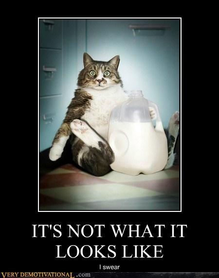 bizarre cat hilarious milk wtf - 6406354944