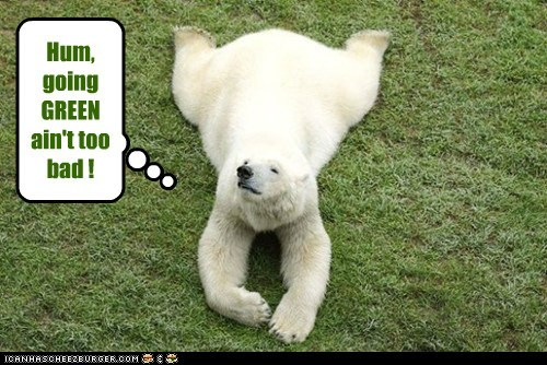 comfortable,going green,grass,happy,not too bad,polar bear,relaxing
