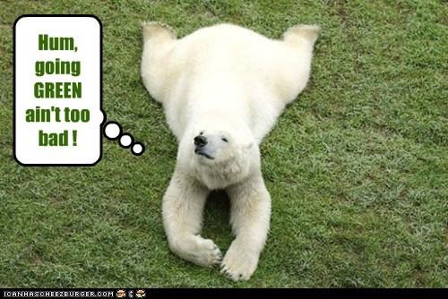 comfortable going green grass happy not too bad polar bear relaxing - 6406457600