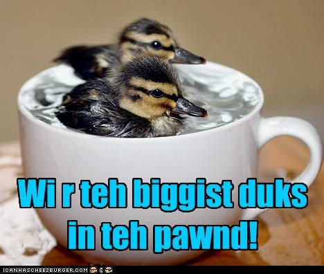 biggest,captions,ducklings,pond,swimming,teacup