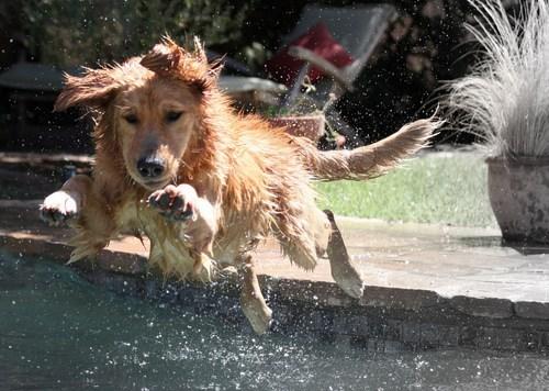its-sundog - 6406852864