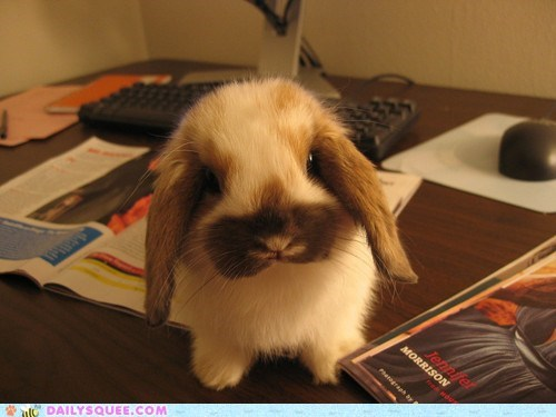 bunny desktop Hall of Fame happy bunday lop rabbit - 6406896384