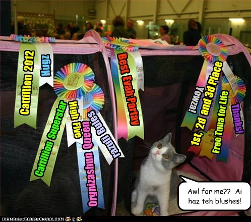 Cattillion 2012 Cattillion Superstar Orgnizashun Queen Best Evah Partay razuli Rules 1st, 2d and 3d Place High Five Free Tuna for Life Awl for me?? Ai haz teh blushes! Yowza! Hugz Thanks!