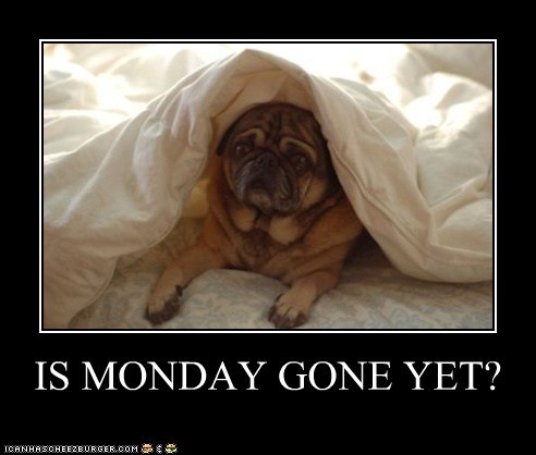 bed blanket dogs i hate mondays monday pug sad dog - 6407479296