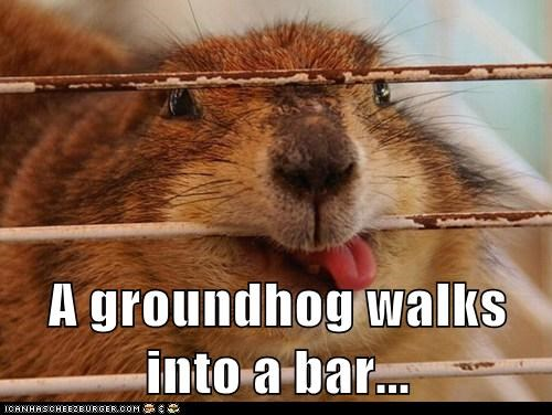 cage eating groundhog joke walks into a bar yum - 6407600640