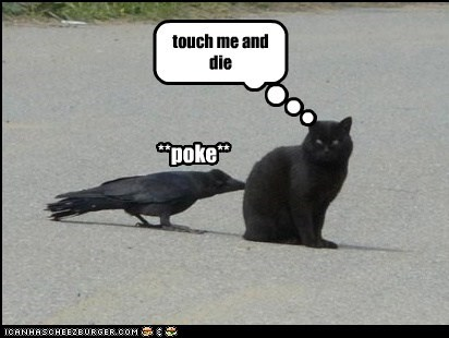 captions cat Cats crow Death Wish die poke tempting fate the girl who played with the girl who played with fire threat - 6407883008