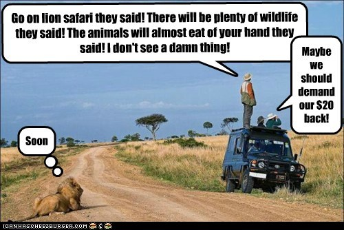 behind,eating,lion,oblivious,pounce,safari,SOON,stupid,They Said
