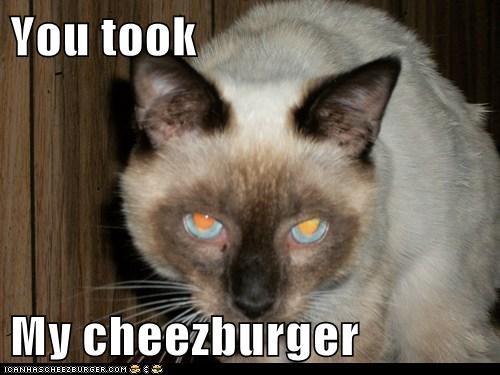 Cheezburger Image 6407934208