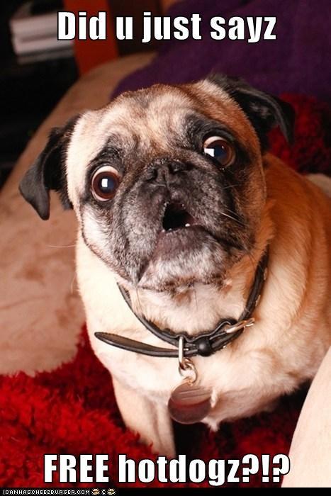 amazed hotdogs pug - 6408096768