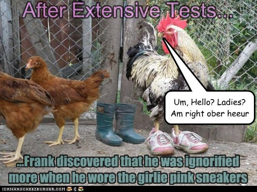 attention,captions,chickens,frank,hens,ignored,ladies,pink,rooster,shoes,sneakers,testing