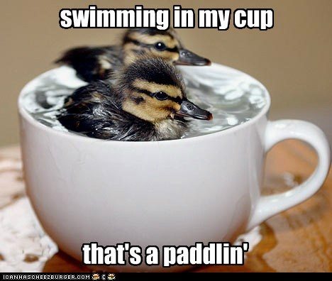 cup,ducklings,paddling,pun,simpsons reference,swimming