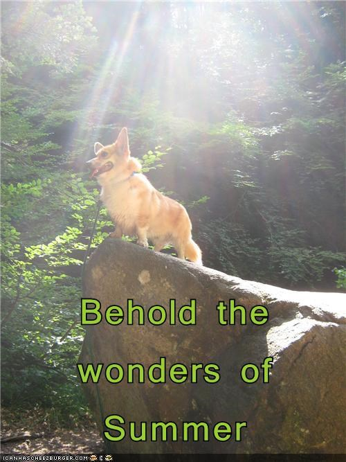 corgi dogs Forest happy summer wonder