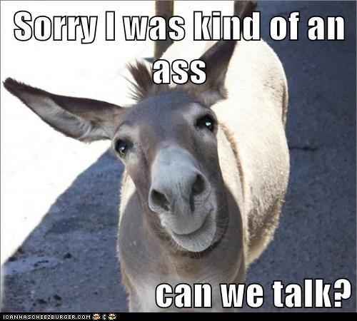 apology ass donkey pun sorry talk - 6408914432