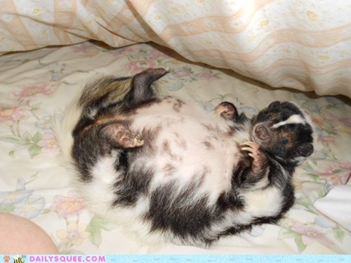 bath time,belly rub,grooming,pet,reader squee,skunk
