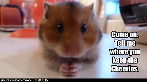 captions,cheerios,close up,hamster,tell me,where