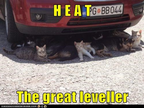 car Cats cool down Heat hot shade summer temperature - 6409381888
