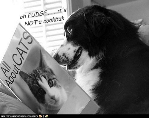 book cat cookbook dogs what breed