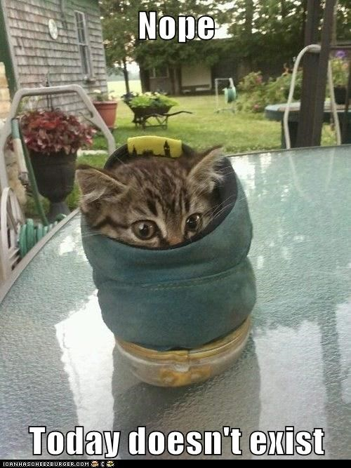 captions Cats hide nope shoe today - 6409521408