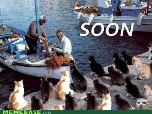 boat Cats fisher SOON - 6410219776
