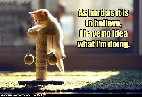 captions cat toys cat tree Cats climbing dumb i have no idea what im doing improvise lolcats play playing - 6410816000
