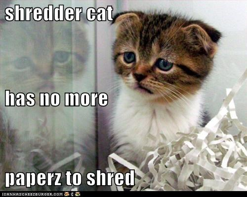classic classics depressed lolcat paper Sad shred