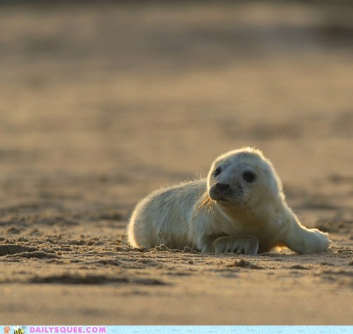 baby beach lonely lost pup seal - 6411310592