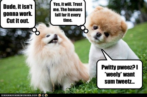 dogs,lolspeak,playing dumb,pomeranians,too cute,treats