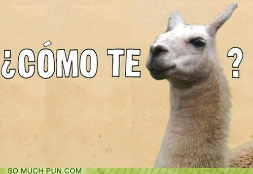 como te lama,literalism,llama,question,similar sounding,spanish