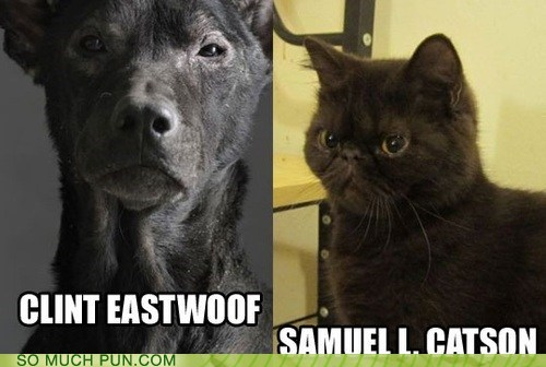 cat,Cats,Clint Eastwood,dogs,expressions,puns,Samuel L Jackson,similar sounding,suffix,surname
