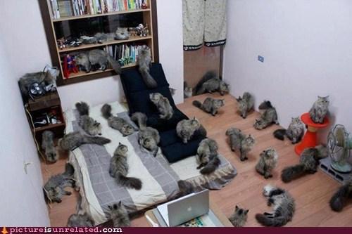 best of week Cats pets shopped pixels suddenly wtf - 6411385088