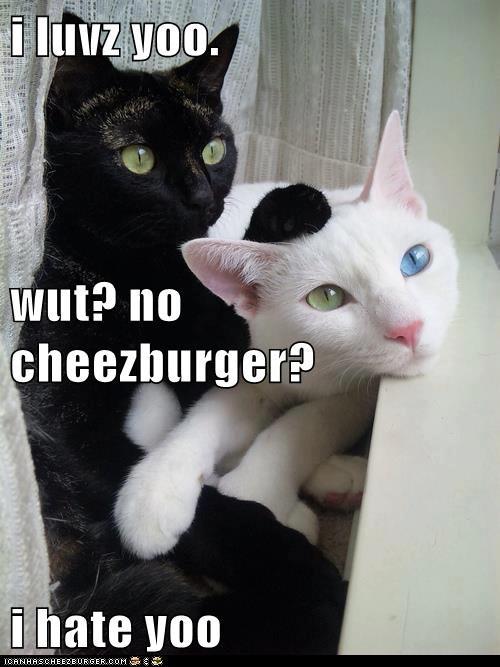 Cheezburger Image 6411606528