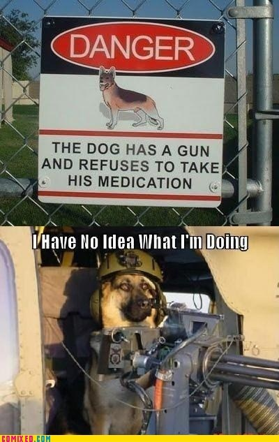 dogs,gun,i have no idea what im do,i have no idea what im doing,the internets,warning sign