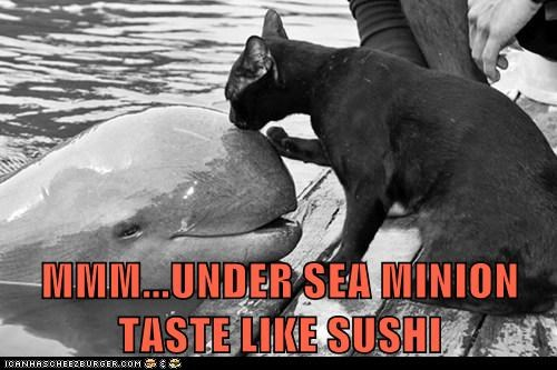captions Cats food ocean porpoise seafood smell sushi taste water whale