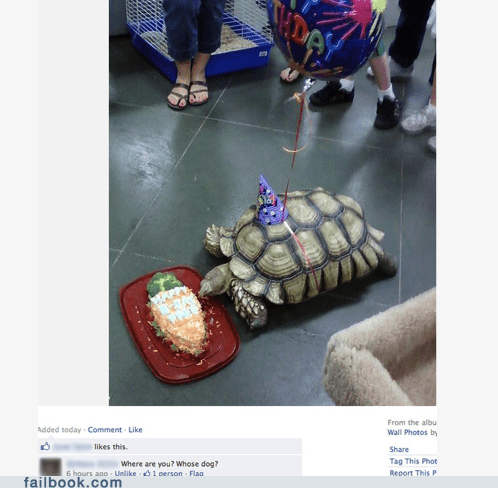 cake,dogs,grandma,old people,turtle