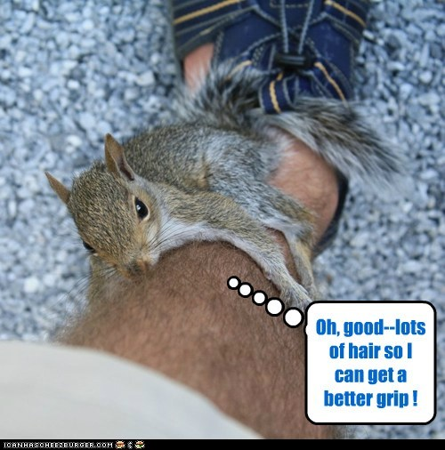 art climbing hair instructions legs squirrel - 6411885568