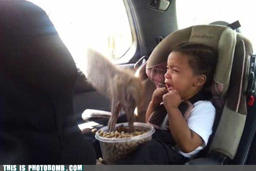 animal,Animal Bomb,food,kid,omg,ostrich,scary