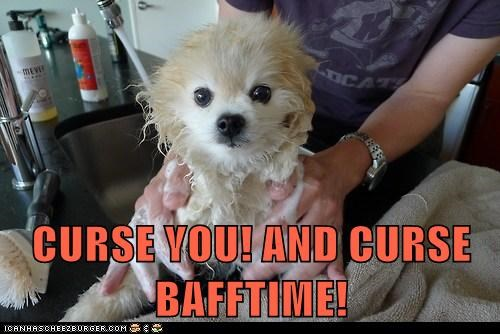 bath time curse you dogs pomeranian - 6411915520