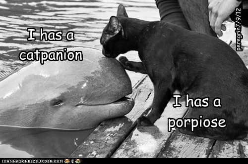 I has a catpanion I has a porpiose peregrin7/9/12