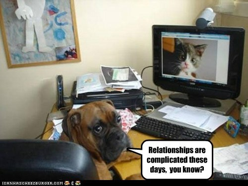 boxer,cat,computer,dogs,its complicated,relationship advice,skype,webcam