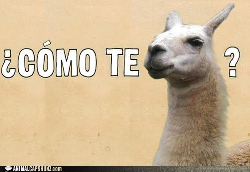 best of the week,captions,como te llama,Hall of Fame,llama,llamas,name,pun,puns,spanish