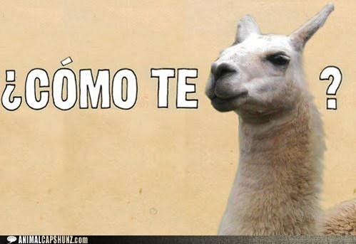 best of the week captions como te llama Hall of Fame llama llamas name pun puns spanish