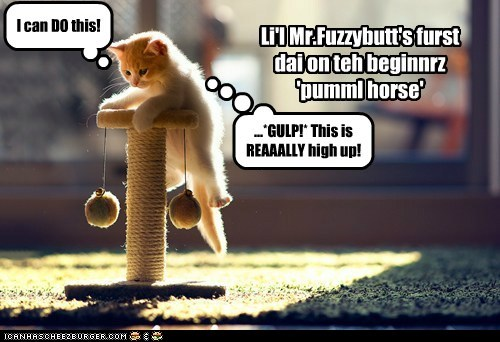 Li'l Mr.Fuzzybutt's furst dai on teh beginnrz 'pumml horse' I can DO this! ...*GULP!* This is REAAALLY high up!