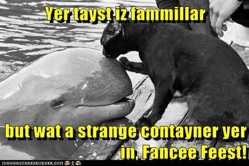 cat,container,dolphin,familiar,fancy feast,sniffing,strange